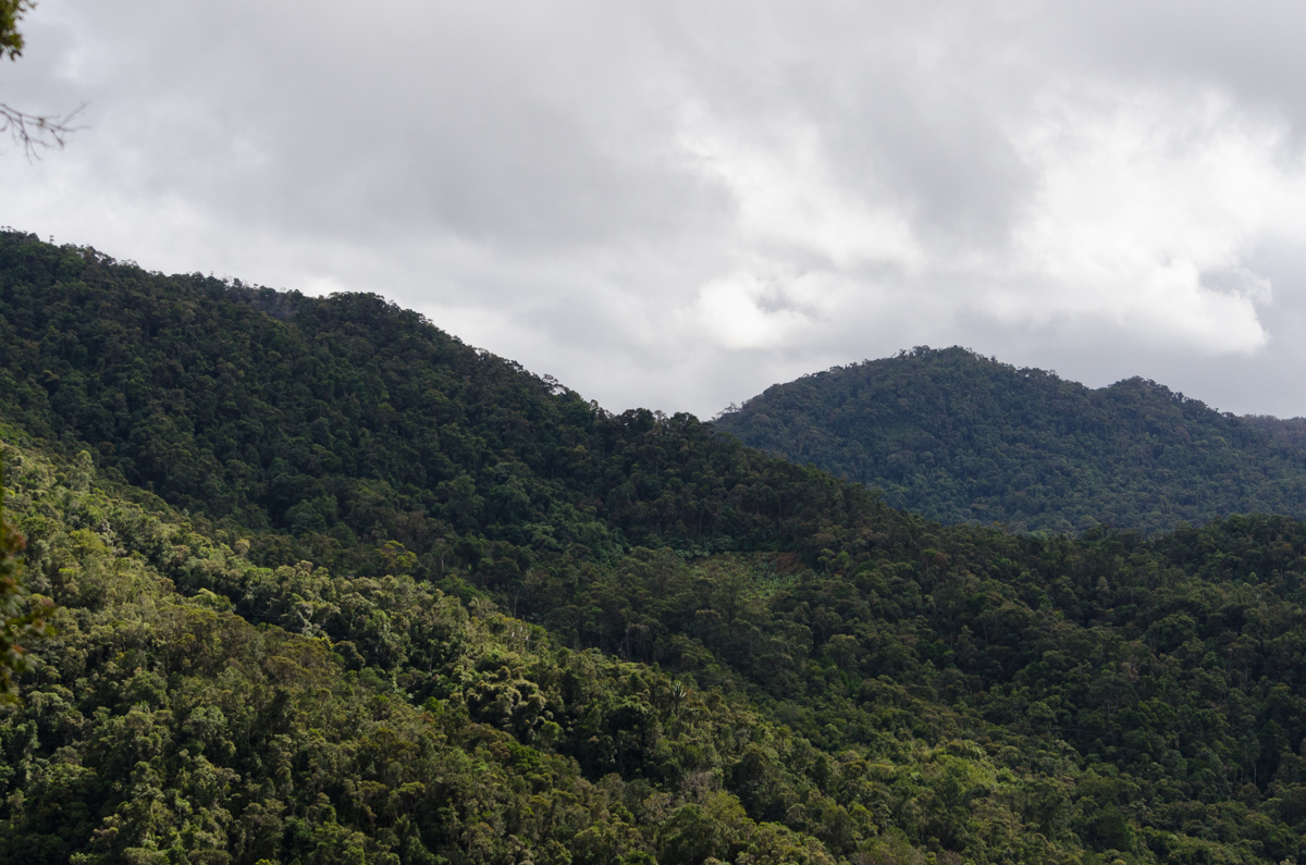 View onto Ranomafana national park